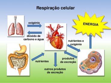 Utilização de nutrientes e eliminação de produtos da atividade celular – Teste Diagnóstico (1) – Soluções