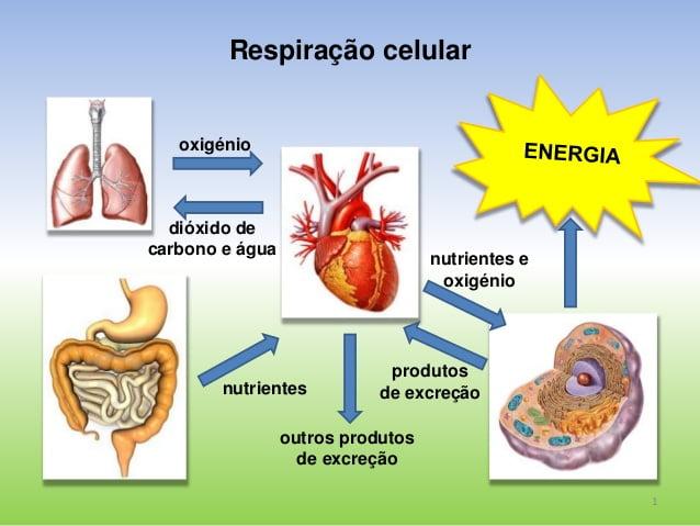 Utilização de nutrientes e eliminação de produtos da atividade celular