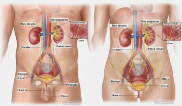 Ficha de Trabalho – Funcionamento do Sistema Reprodutor (3)