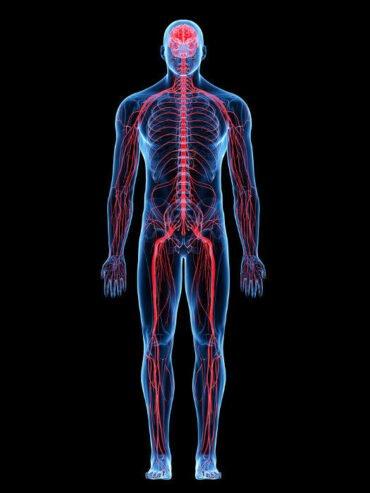 Ficha de Trabalho – O Sistema Nervoso (2) – Soluções